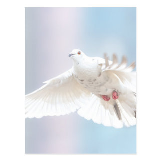 Holy Spirit dove Postcard