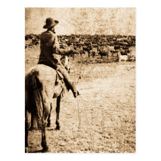 Home on the Range Vintage Lone Cowboy Rancher Postcard