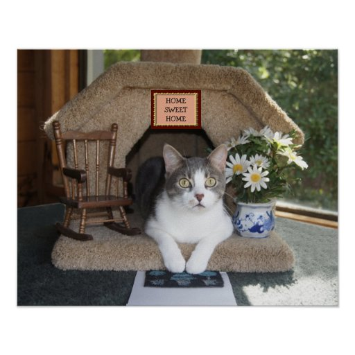 Home Sweet Home Funny Cat Print