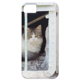 Homeless cat observes street case for the iPhone 5