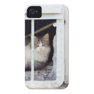 Homeless cat observes street iPhone 4 cover