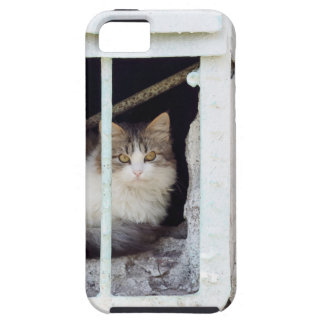 Homeless cat observes street iPhone 5 case