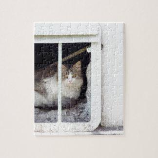 Homeless cat observes street jigsaw puzzle