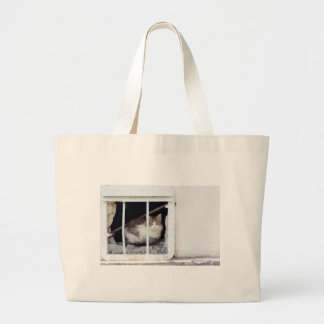 Homeless cat observes street large tote bag