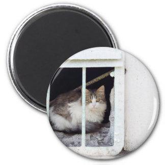 Homeless cat observes street magnet