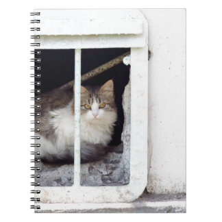 Homeless cat observes street notebook