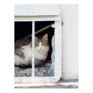 Homeless cat observes street postcard
