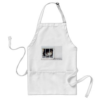 Homeless cat observes street standard apron