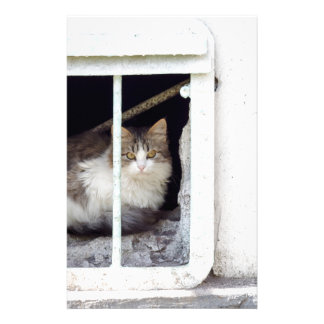 Homeless cat observes street stationery