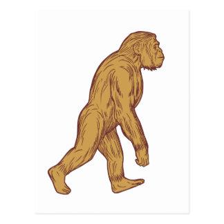 Homo Habilis Walking Side Drawing Postcard