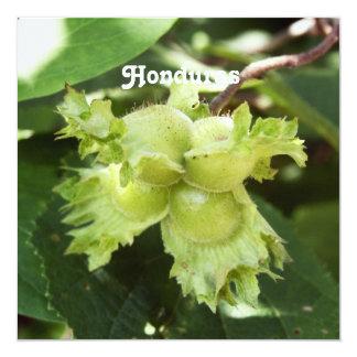 Honduras Hazelnuts 13 Cm X 13 Cm Square Invitation Card