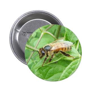 Honey Bee 264 button