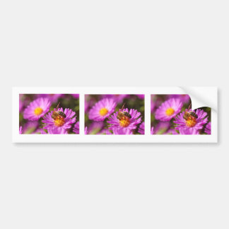 Honey bee and pollination bumper stickers