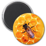 Honey bee fridge magnets