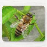 Honey Bee Mousepads