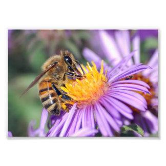 Honey Bee on Purple Pink Flower Art Photo
