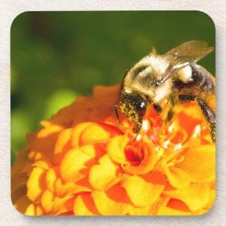 Honey Bee  Orange Yellow Flower With Pollen Sacs Coaster