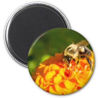Honey Bee  Orange Yellow Flower With Pollen Sacs Magnet