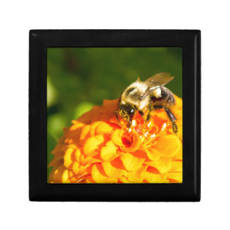 Honey Bee  Orange Yellow Flower With Pollen Sacs Small Square Gift Box