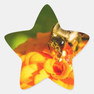 Honey Bee  Orange Yellow Flower With Pollen Sacs Star Sticker