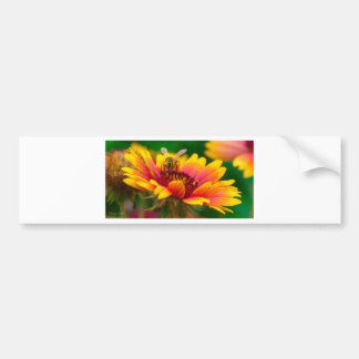 Honey Bee Postcard Bumper Sticker