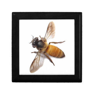 Honey Bee Small Square Gift Box