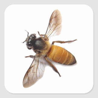Honey Bee Square Sticker