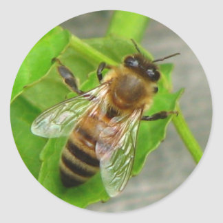 Honey Bee Round Sticker