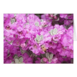 Honey Bee & Texas Sage Card