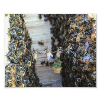 Honey bees holding hands photo print