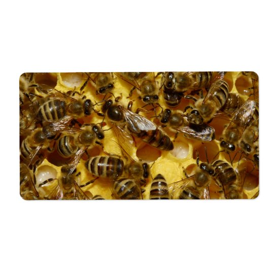 Honey Bees in Hive with Queen in Middle