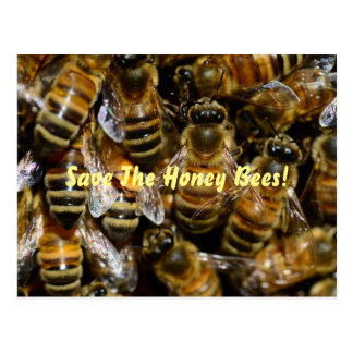 Honey Bees In the Hive Postcard
