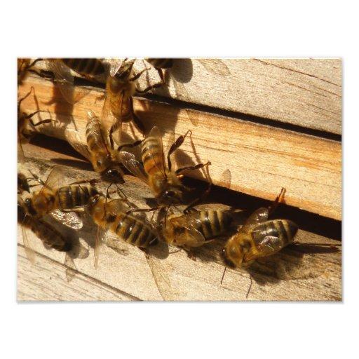 Honey Bees Photo Art