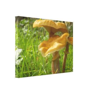 Honey Fungus Canvas Print