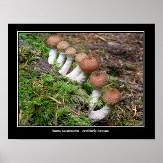Honey Mushrooms on a Row Poster