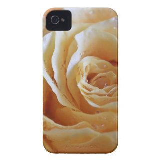 Honey Peach Rose iPhone 4 Case-Mate Cases