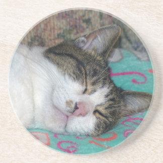 Honey Sleeping Sandstone Coaster