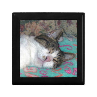 Honey Sleeping Small Square Gift Box