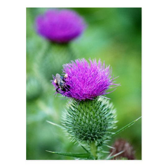Honeybee and Thistle Postcard