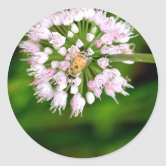 HoneyBee Classic Round Sticker
