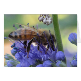 Honeybee Drinking Nectar Card