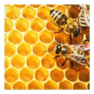 Honeycomb and Bees Pattern Design Photo Art