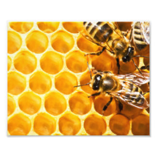 Honeycomb and Bees Pattern Design Photo Print