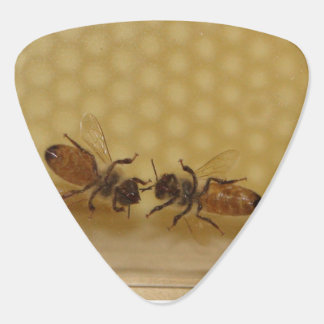 Honeycomb and honey bees guitar pick