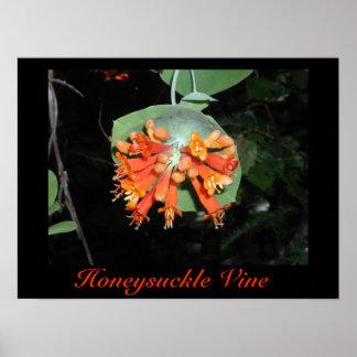Honeysuckle Vine Print