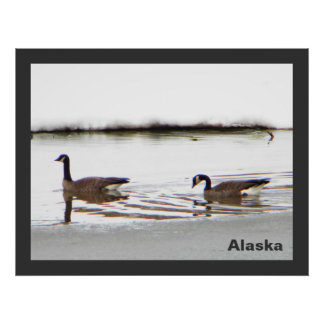Honkers - Canada Geese Posters