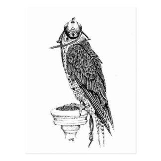 Hooded Falcon on block postcard