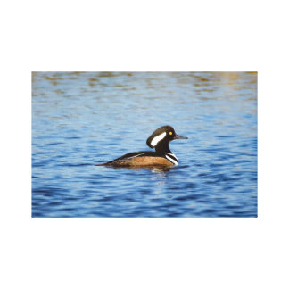 Hooded Merganser Drake Canvas Canvas Print