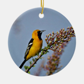 Hooded Oriole in Ocotillo Pink flowers Ornament