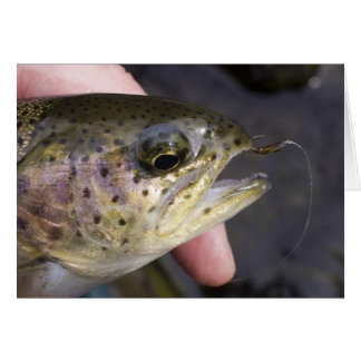 Hooked on fly fishing - Card